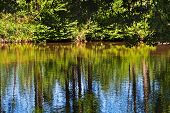 stock photo of shimmer  - Lake in a forest with shimmering water - JPG