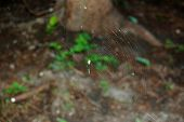 foto of spider web  - Spider web and spiders victim in his web - JPG