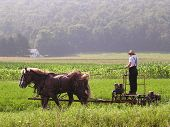 image of horse plowing  - The beginning of an Amish day on the farm - JPG