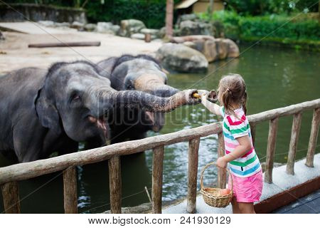 Kids Feed Elephant In Zoo