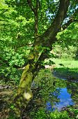 Woodland Spring Scene With Vibrant Green Trees Overhanging A Calm Blue Pond And Vibrant Green Foliag poster