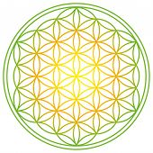Flower Of Life With Spring Energy Colors. Geometrical Figure, Spiritual Symbol And Sacred Geometry.  poster