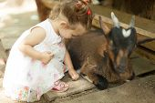 Friendly Goats Want A Little Pet And Some Yummy Food From This Cute Little Girl At A Petting Zoo. poster
