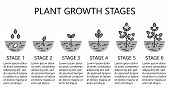Plant Growth Stages Infographics.  Monochrome Line Art Icons. Planting Instruction Template. Linear  poster