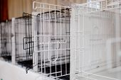 Cages For Storing Animal Dogs, Cats In Shelters, Experiences, Shows poster