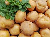 Raw Potatoes Pile Harvest Closeup & Potatoes Leaf On Organic Farm. Potatoes Plant Vegetable Harvest  poster