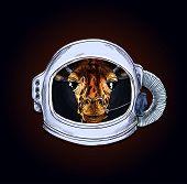 Giraffe Head In Astronaut Helmet, Black Bg poster