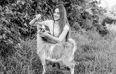 Girl Play Cute Goat. Veterinarian Occupation. Eco Farm. Love And Care. Feeding Animal. Animals Law.  poster