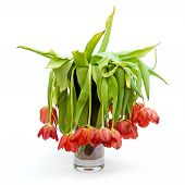 picture of droopy  - A vase full of droopy and dead flowers  - JPG