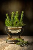 Elegant antique vase full of pine sprigs for Christmas decoration