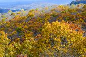 Autumn foliage in Shenandoah National Park - Virginia, United States