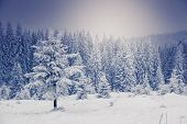 Fantastic winter landscape. National Park. Carpathian, Ukraine, Europe. Beauty world.