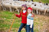 stock photo of shepherdess  - Kid girl shepherdess sisters happy with flock of sheep and wooden stick in Spain - JPG