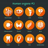 picture of node  - Vector illustration of icons of internal human organs and systems - JPG
