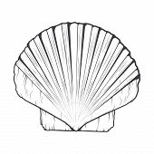 pic of monochromatic  - Sea Shell isolated on a white background - JPG