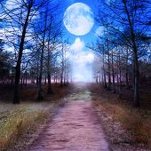 picture of full_moon  - Full Moon And Woods - JPG