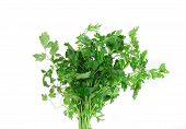 stock photo of chinese parsley  - Bunch of parsley on a white - JPG