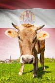image of french polynesia  - Cow with flag on background series  - JPG