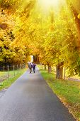 image of street-walker  - A sunny hiking way in autumn - JPG