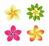 image of organist  - Set of Icons with Tropical Flowers Vector Illustrations on white background - JPG