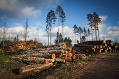 stock photo of deforestation  - Deforestation cutted trees for construction in the forest - JPG