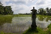 image of altar  - The top of rice terraces with an altar - JPG