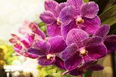 image of orquidea  - Beautyful Orchid in the city on morning - JPG