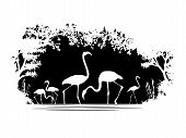 stock photo of flamingo  - black and white Animal of wildlife  - JPG