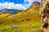 stock photo of pastures  - Ranch north of  Durango Colorado with cows roaming the pasture in the fall  - JPG