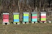 stock photo of bee-hive  - Bee Hive boxes on the field - JPG