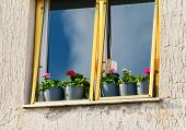 stock photo of flower pot  - Window with flower pot - JPG