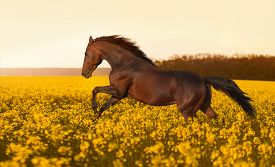foto of stallion  - Beautiful strong horse galloping - JPG