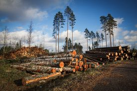 foto of cutting trees  - Deforestation cutted trees for construction in the forest - JPG