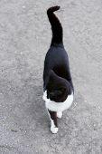pic of homeless  - Homeless cat outdoors - JPG