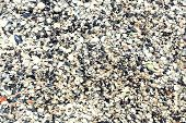 image of beach shell art  - Pile of seashells on beach sand - JPG