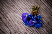 pic of viola  - Bouquet of violet flowers Viola Odorata on wooden background - JPG