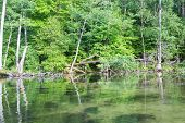 image of kayak  - Beautiful Krutynia river landscape photographed from kayak - JPG