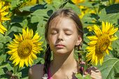 foto of sunbather  - Girl sunbathes in the sunflowers on a hot summer day close up - JPG