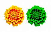image of marigold  - Isolated french marigold flower with clipping path - JPG