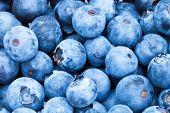 image of pick up  - Bunch of freshly picked blueberries  - JPG