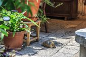 pic of testudo  - Side view of brown tortoise walking in the garden among flowerpots - JPG