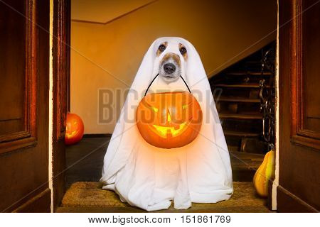 poster of Halloween  Ghost  Dog Trick Or Treat