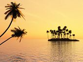 Sunset coconut palm trees and small  poster