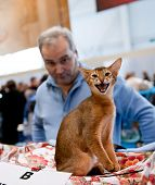 International Exhibition Of Cats