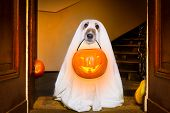 Halloween  Ghost  Dog Trick Or Treat poster
