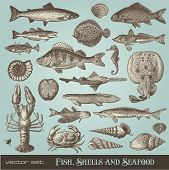 picture of shell-fishes  - vector set - JPG