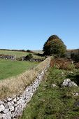 picture of devonshire  - An old stone wall in the Devonshire countryside - JPG