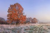 Autumn Landscape. Amazing Fall In November. Morning Autumnal Nature. Cold Meadow With Hoarfrost On G poster
