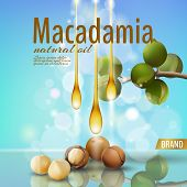 Realistic 3d Macadamia Nut Oil Cosmetic Shell Ad Template. Branch Leaves Nutshell. Light Summer Sky  poster