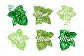 Herbal Tea With Fresh Mint Logo Templates Set. Isolated Hand Drawn Marker Painting Labels With Peppe poster